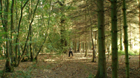 Beautiful Kent woodland