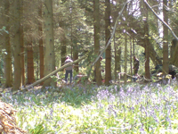 Tracking in Kent woodland